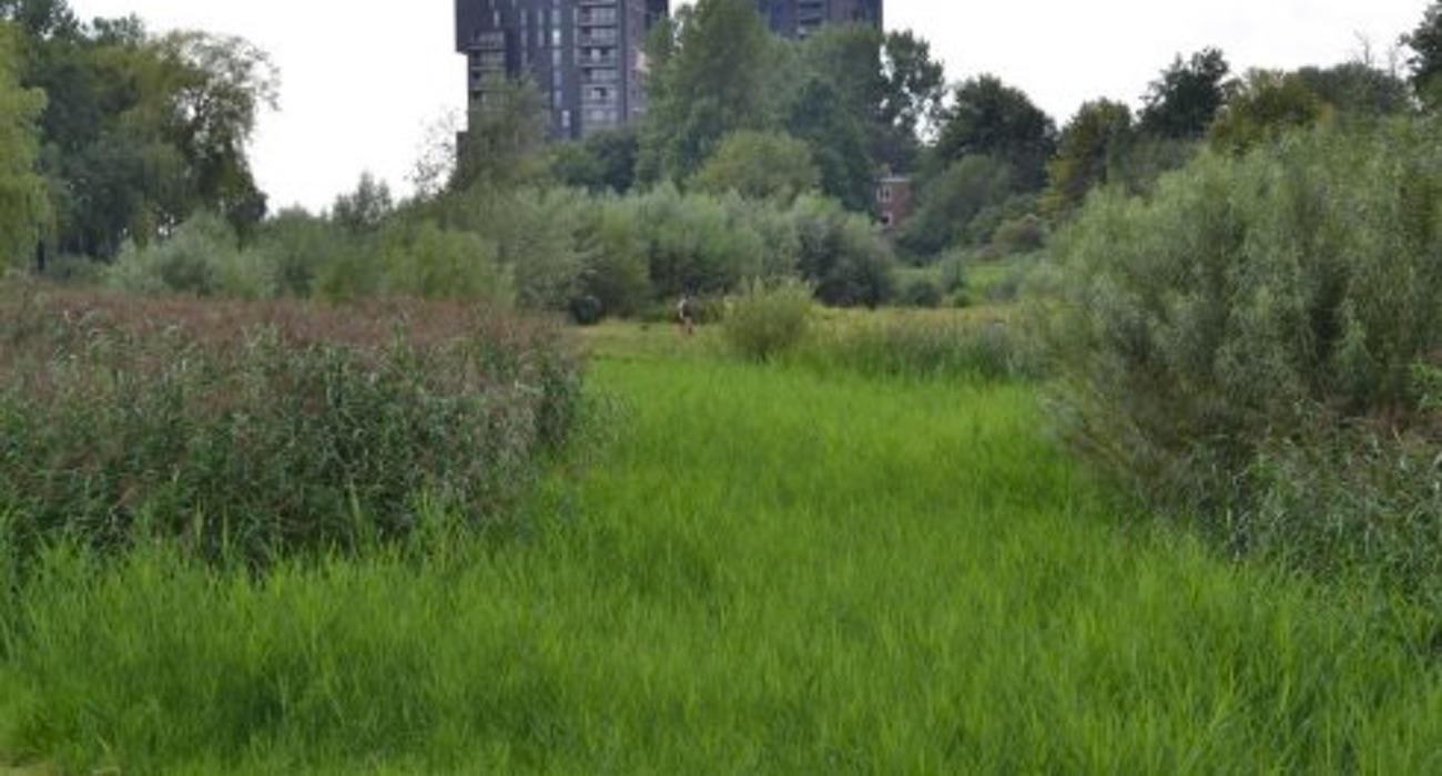 stadsecologie foto WUR.NL