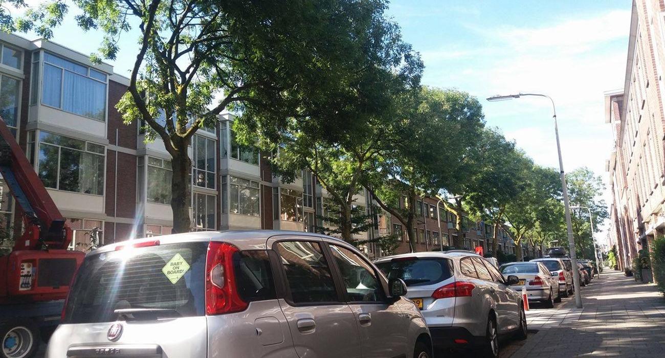 van der Duijnstraat